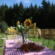 Auch im Garten gibts genügend Sitzplätze für große Familien