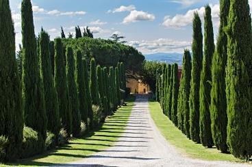 Stilechte Anreise zum Al Gelso Bianco – Zypressen links, Zypresse rechts, das Weingut im Blick