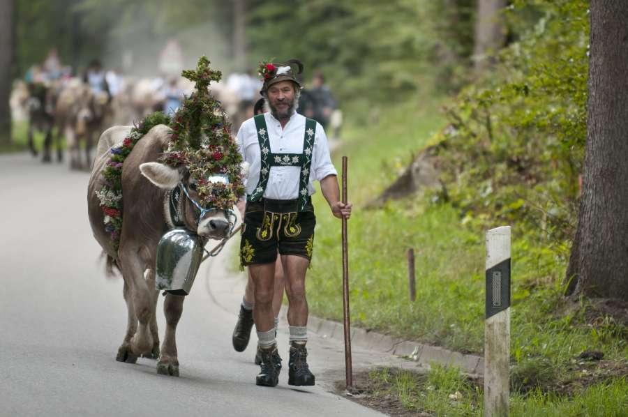 Urlaub auf dem Bauernhof mit Kindern im Allgäu: Viehscheid
