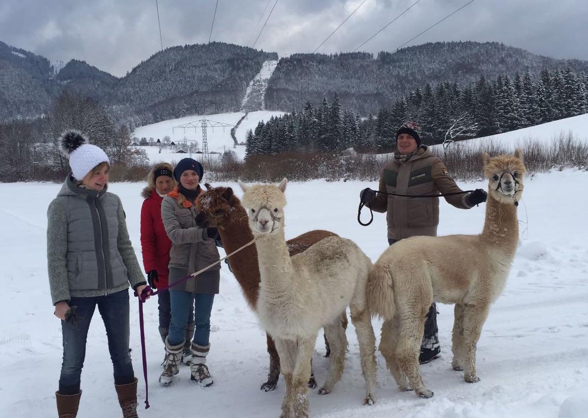 Familien-Winterwanderung mit den Alpakas vom Bett & Brot das Franzl