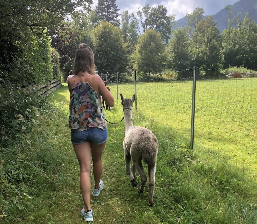 So ein Spaziergang mit Alpaka ist mal ganz was anderes! (Foto: Anke Hainzinger privat)