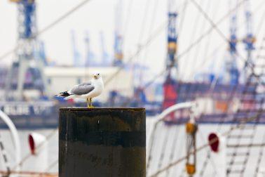 Moin moin, der Hamburger Hafen mit Kindern