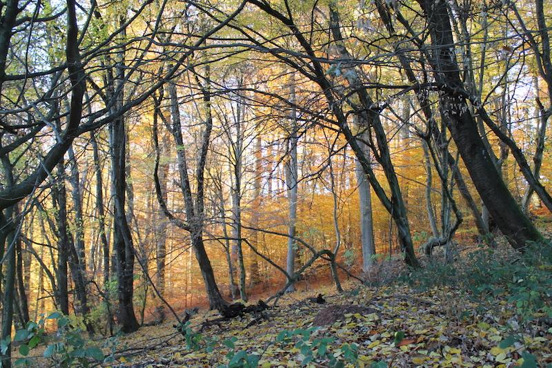 Der wildromantische Odenwald