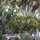 Im Botanischen Garten des Cretan Malia Parks könnt Ihr eine Tour mit dem Gärtner machen