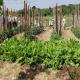Farmrundgang im Gemüsegarten - naschen erlaubt!