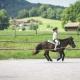 Hof-Gottenau-Pferdelonge