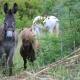 Dürfen wir vorstellen: Esel Hektor, Pony Bebis und Pferd Jimmy!