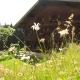 Im Frühling werden Blumensträuße gesammelt