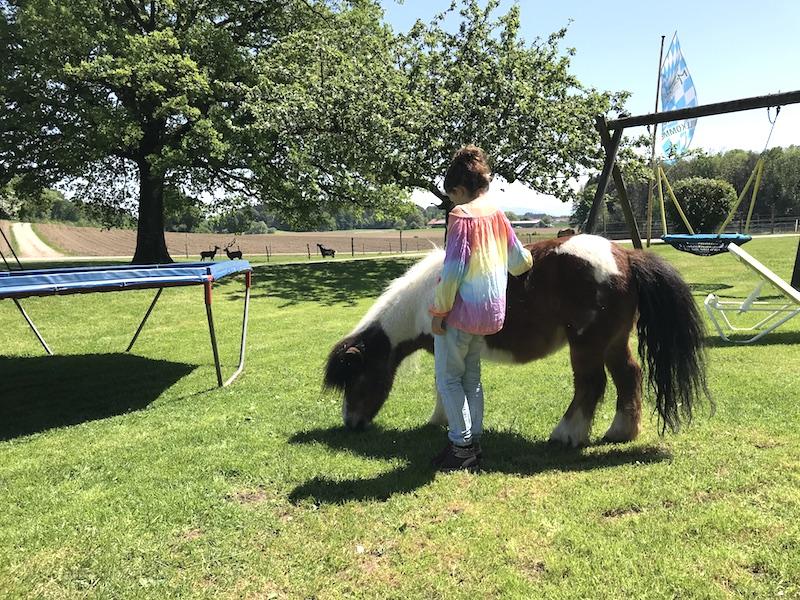 Ein Tete a Tete mit dem Pony auf dem Moierhof im Chiemgau