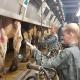 Beim Bauern gleich nebenan können Eure Kids das Melken üben.