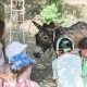 Esel Onkey liebt Kinder