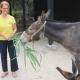 Maria und der liebe Esel Hektor