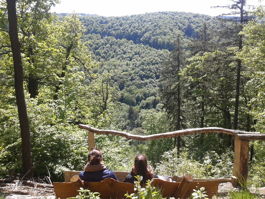 Waldluft schnupper und Natur genießen: Der Harz ist ein Paradies für Outdoor-Families