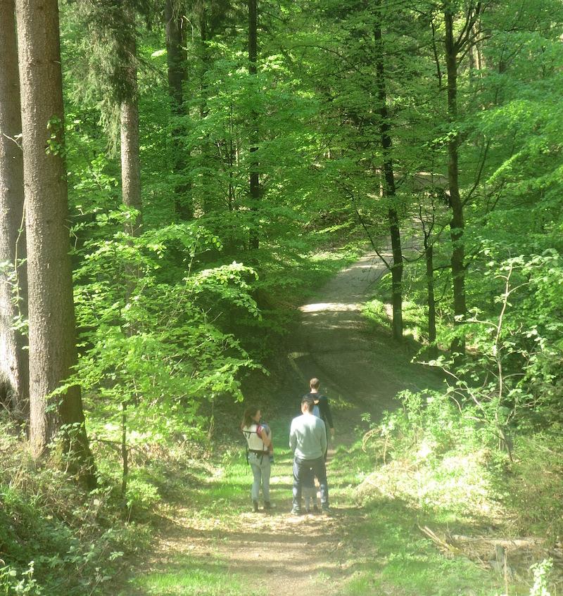 Wandern in den endlosen Wäldern von Bad Sachsa