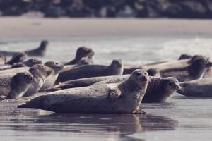 Urlaub mit Kindern auf der Nordseeinsel Helgoland