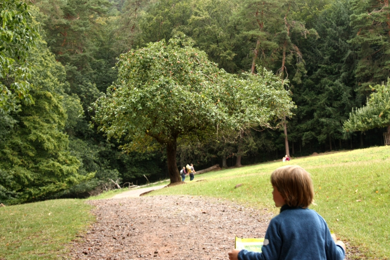 Pfalz mit Kindern: Beim Tieresuchen im Wildpark vergessen die Minis doch glatt, wie weit sie schon gelaufen sind