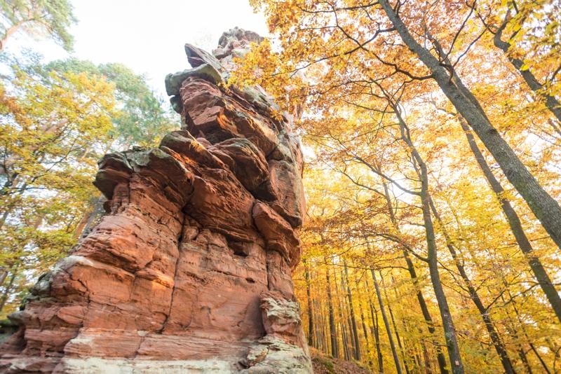 Pfaelzerwald im Herbst
