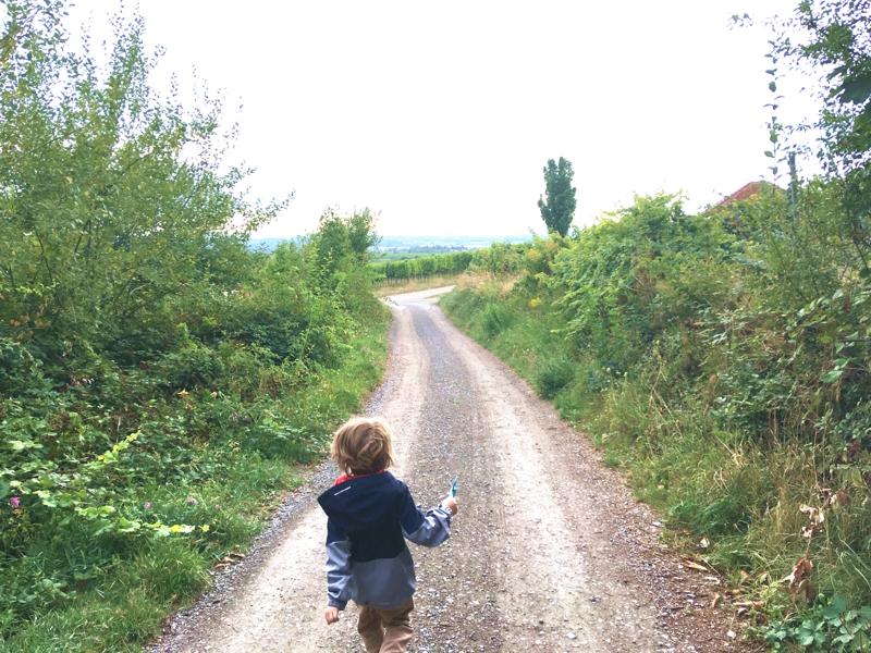 Pfalzurlaub mit Kind: Eine Tour durch die Weinreben