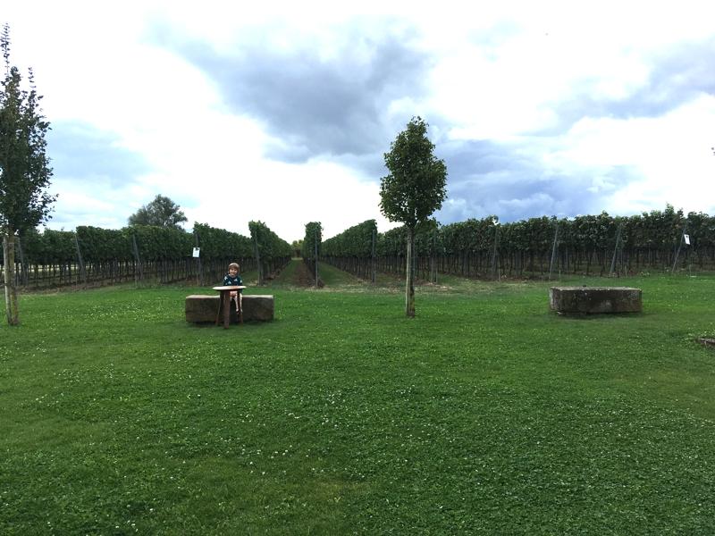 Familienurlaub Pfalz: Ohne Weinprobe gehts nicht!