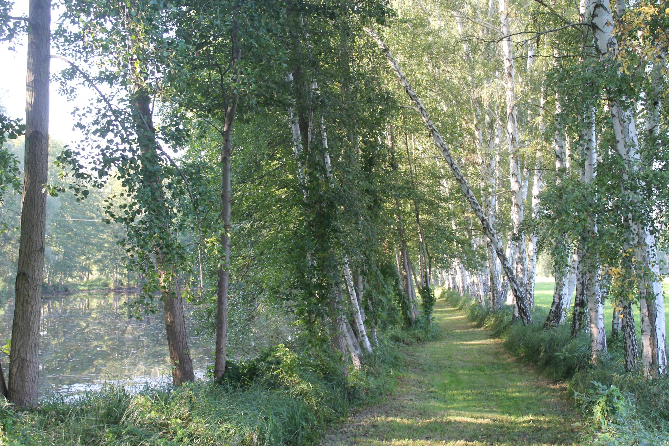 Spazieren im Spreewald