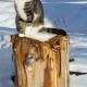 Katze Andi freut sich immer über Gäste