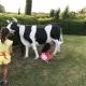 ... eine Kuh (allerdings gibt die keine Milch;-)