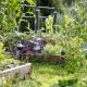 Im Kräuter- und Obstgarten darf sich jeder bedienen