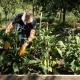 Frisches Gemüse in bester Bioqualität könnt Ihr im La Barbialla täglich genießen