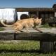 Die Hofkatzen des Barbialla Nuova freuen sich über viele Streicheleinheiten