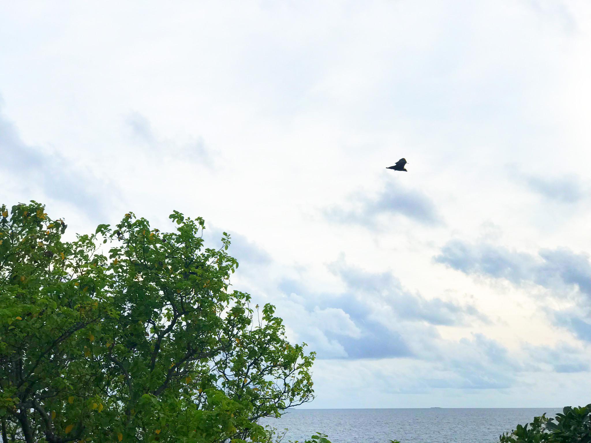 Blick von unserem Balkon aus aufs Meer und auf einen Flughund...