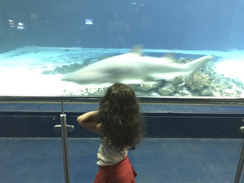 Huch!!! Ein Hai schwimmt vorbei! Das Aquarium in Fehmarn