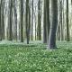 """Der hofeigene Wald, die """"Eitz"""""""