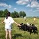 Hier lernt ihr viel über die Arbeit auf dem Bauernhof