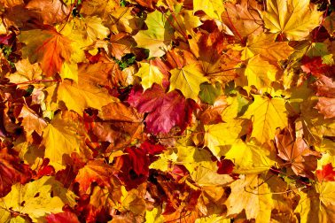 Herbstferien, wohin bloß?