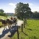 Huberhof - Kutschnfahrt mit den Ponys