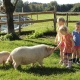 Huberhof - der einzige Hof ohne Landwirtschaft, es gibt aber Hühner, Enten, Ziegen, Schafe, Schildkröten, Schweine, Hasen, Katzen, Pferde und Ponys!