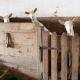 Die Ziegen der Nachbarn sind vor allem bei den Kids ein echtes Highlight