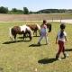 Die Kinder können sich auf dem Moierhof frei bewegen. Auch zu den Ponys, Ziegen, Schweinen, Kühen auf die Koppel und in den Stall