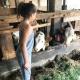 Moierhof - Die große Mrs. Little Travel im Stall bei den Kühen