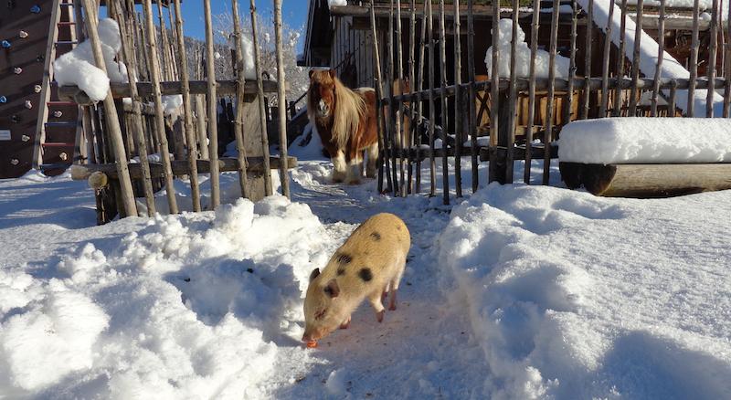 Auch die Tiere in der Ödmühle mögen den Schnee! (Copyright: Ödmühle)