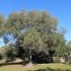 Im Petre e Sule wohnt Ihr mit teilweise 300 Jahre alten Olivenbäumen