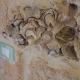 Manche der alten Steine vom Feld, die in den Häusern verbaut wurden, haben sogar Muschel-Fossilien