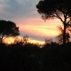 Der Sonnenuntergang inmitten Olivenhainen - woah!