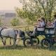 Ihr könnt als Familie auf dem Gelände eine Kutschenfahrt unternehmen