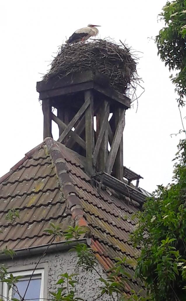 Störche überall - auf Hochspannungsleitungen, alten Schornsteinen und Co. in Sachsen-Anhalt mit Kindern