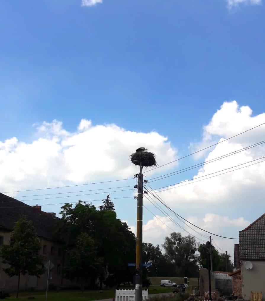 Storchennester findet Ihr in Sachsen-Anhalt alle Nase lang....