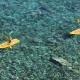Am windgeschützten Strand Remaiolo könnt Ihr im Diving Center Kanus, Treetboote und Tauchausrüstung ausleihen