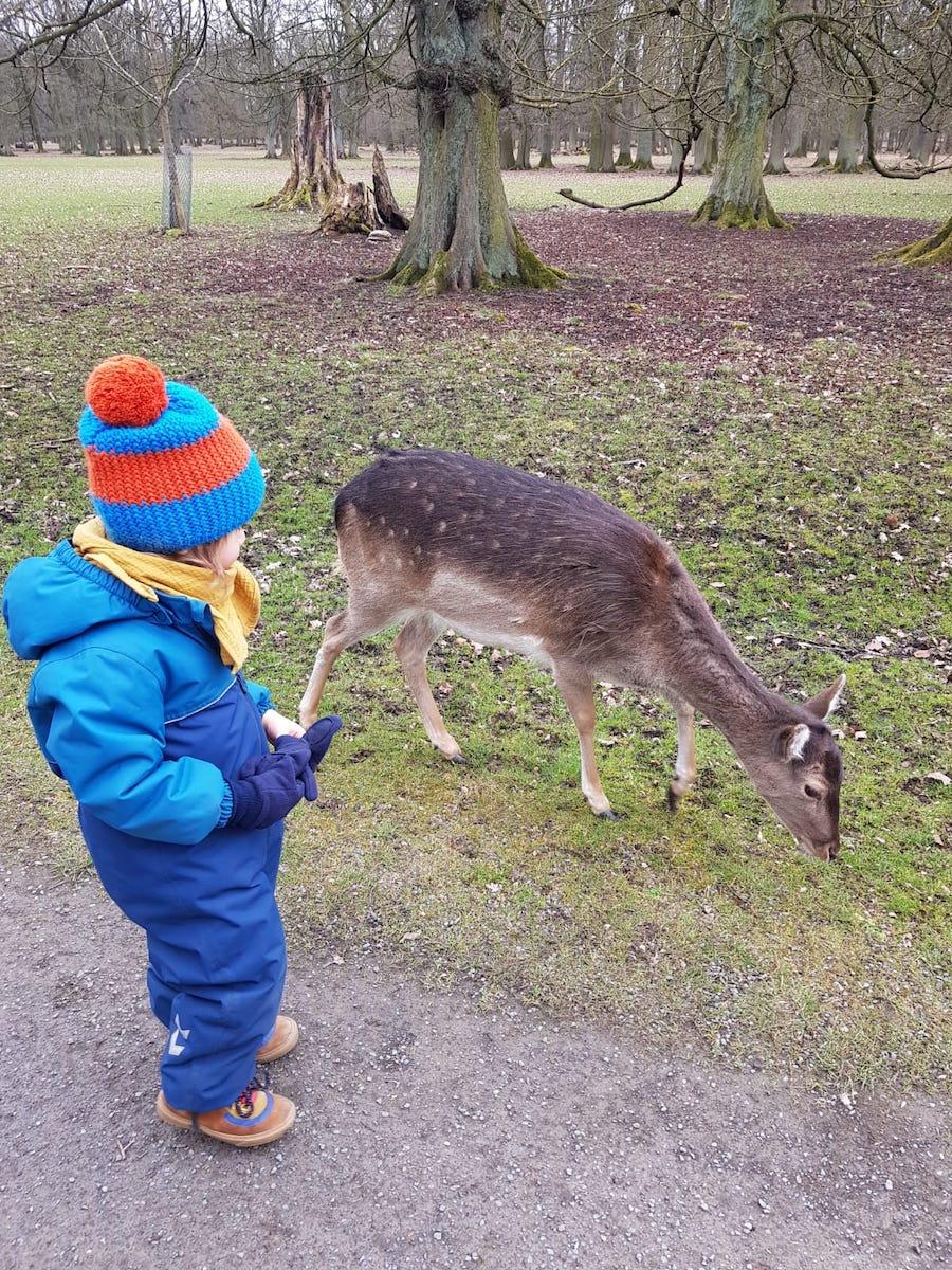 Lucias Sohn per Du und Du mit einem Reh im Tiergarten