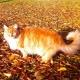 Und das ist die freundliche Maine- Coone-Katze Atticus - der Löwe der Farm;-)