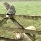 Katzen, Schafe, Schweine, Hühner, Pferde und zwei Alpacas freuen sich in Tredethick auf Euren Besuch